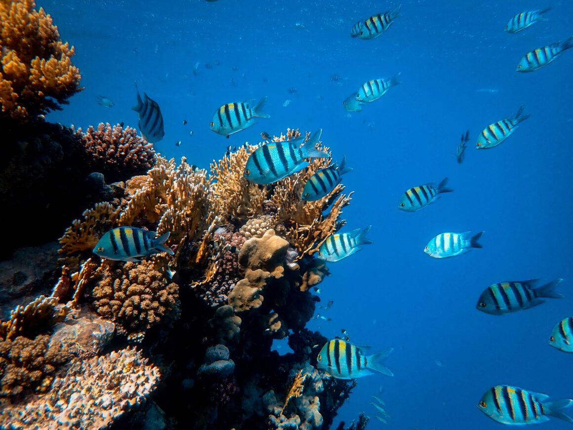 Dlaczego ryby są najsmutniejszymi zwierzętami