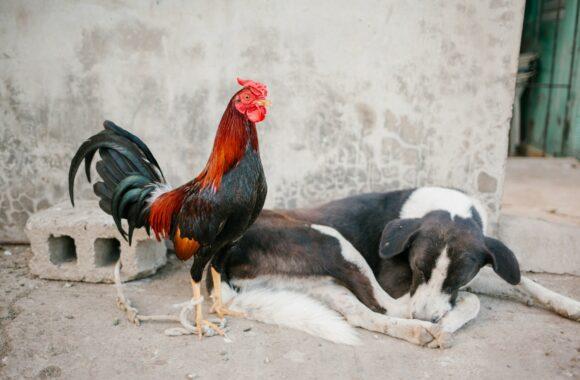Geneza i problem bezdomności zwierząt
