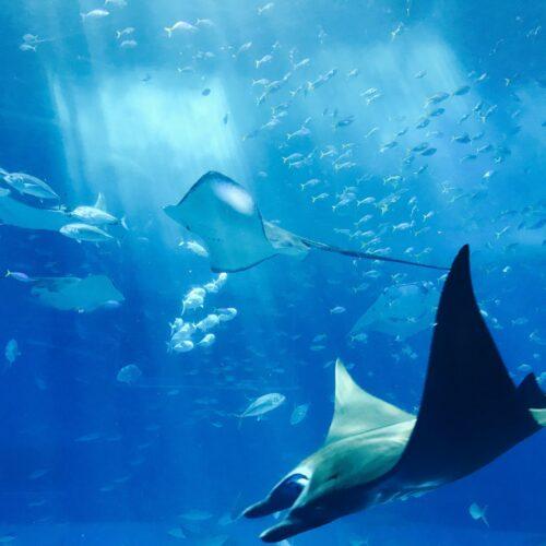 Atrakcje turystyczne Gdyni – Akwarium Gdyńskie, niezwykły ogród zoologiczny